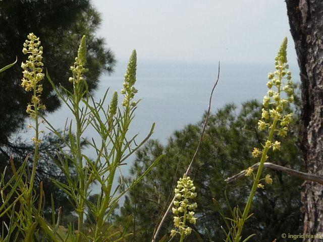 13.04.2015 - Griechenland, oberhalb von Sirivi, Chalkidiki Halbinsel Kassandra