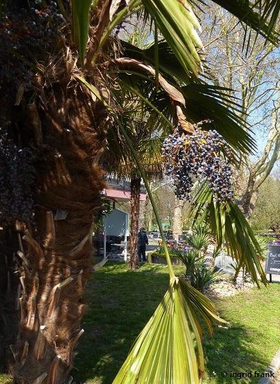 15.04.2019 - Kurpark Bad Krozingen
