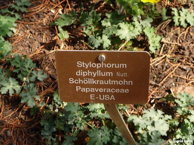 27.03.2014 - Botanischer Garten der Universität Basel