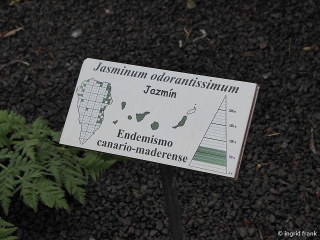 23.02.2018 - Botanischer Garten Informationszentrum Nationalpark Caldera de Taburiente, La Palma
