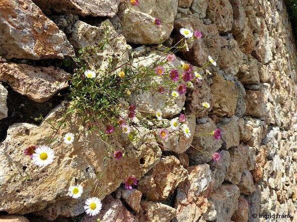 01.05.2019 - Toskana, Halbinsel Monte Argentario