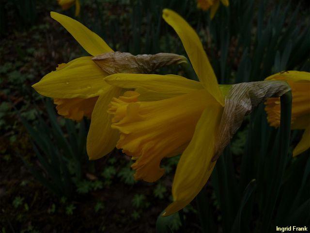 29.03.2010 - Im eigenen Garten