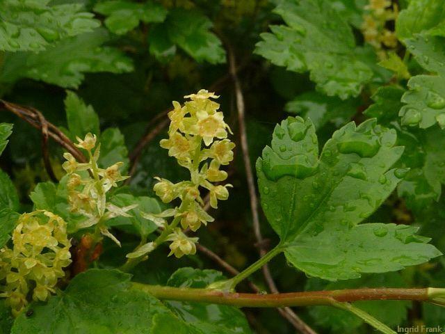 09.05.2013 - Botanischer Erlebnisgarten Altenburg