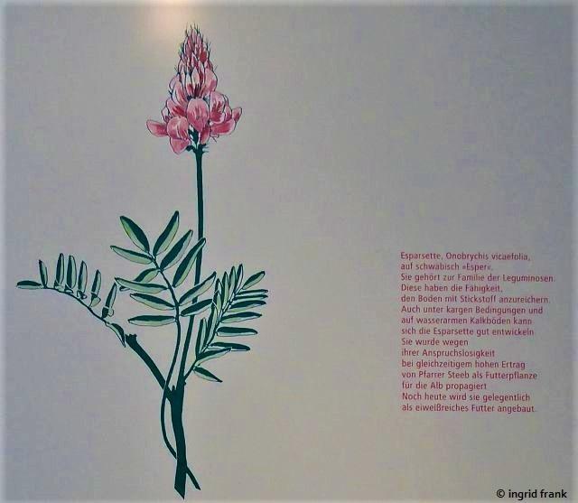 """14.08.2018 - Im """"Freilichtmuseum Beuren, Museum des Landkreises Esslingen für ländliche Kultur"""""""