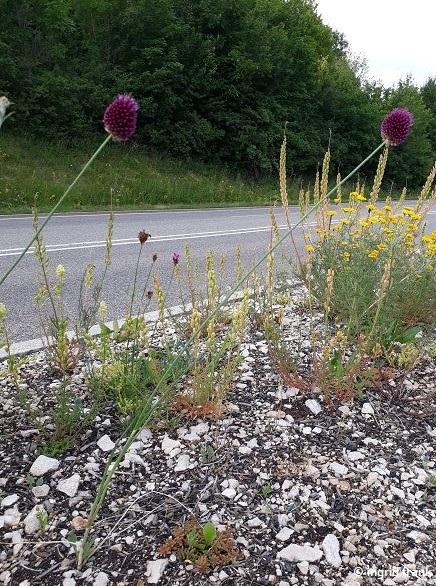 08.07.2019 - Straßenrabatte in Zwiefalten