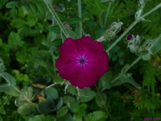 30.06.2010 - Im eigenen Garten