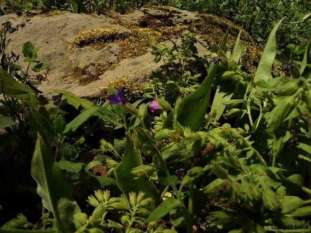 08.05.2018 - Botanischer Garten Dresden