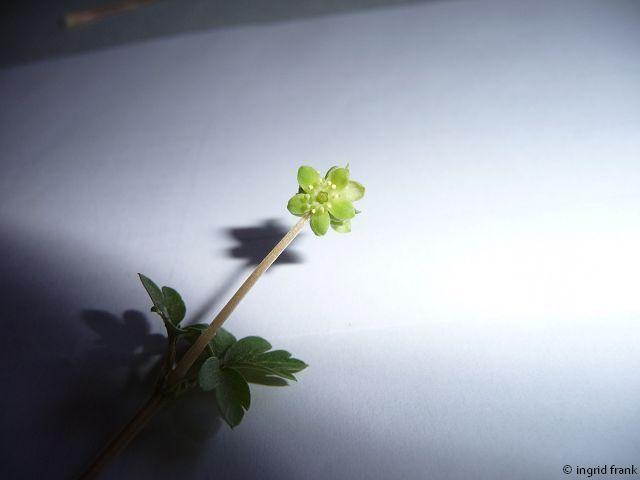 29.03.2011 - Im eigenen Garten