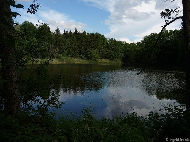 07.06.2015 - Im Lochmoos bei Oberankenreute