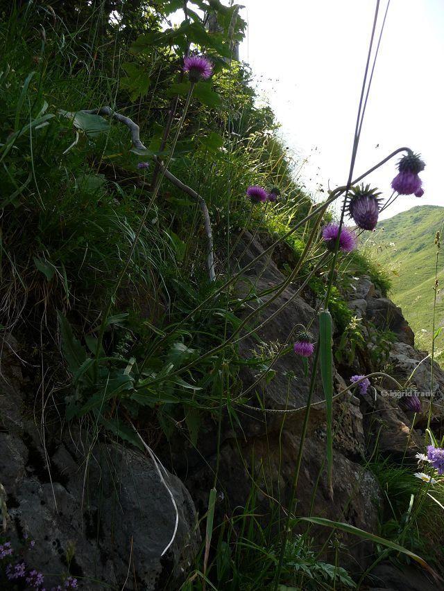 12.07.2015 - Im Bregenzer Wald auf dem Weg zur Mörzelspitze
