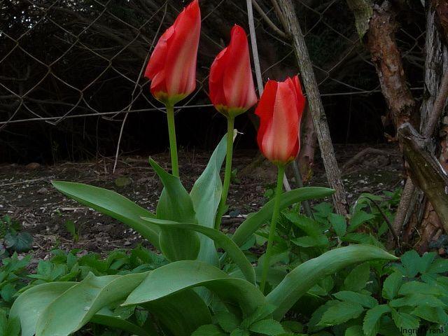 12.04.2010 - Im eigenen Garten