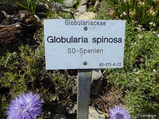 12.05.2019 - Botanischer Garten Universität Würzburg
