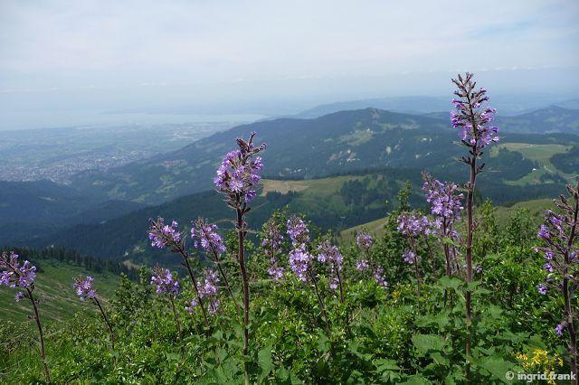 12.07.2015 - Auf dem Weg zur Mörzelspitze im Bregenzer Wald mit Blick auf den Bodensee