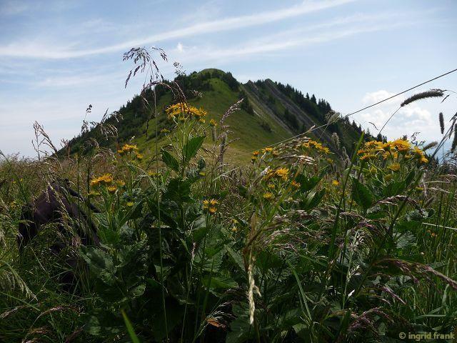 12.07.2015 - Auf dem Weg zur Mörzelspitze in Vorarlberg
