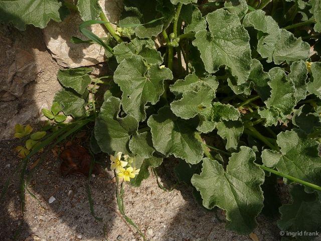 30.04.2016 - Insel Elba