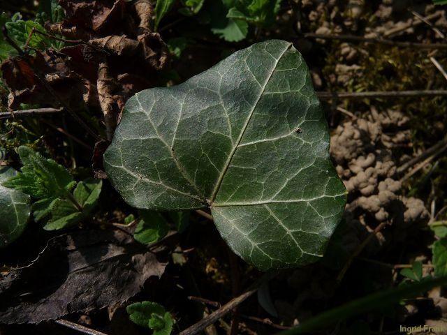 24.04.2010 - Im eigenen Garten