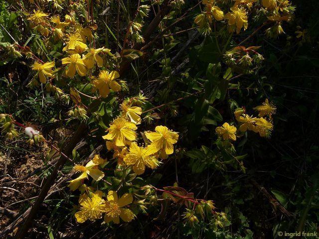 17.04.2015 - Halbinsel Athos, Chalkidiki, Griechenland