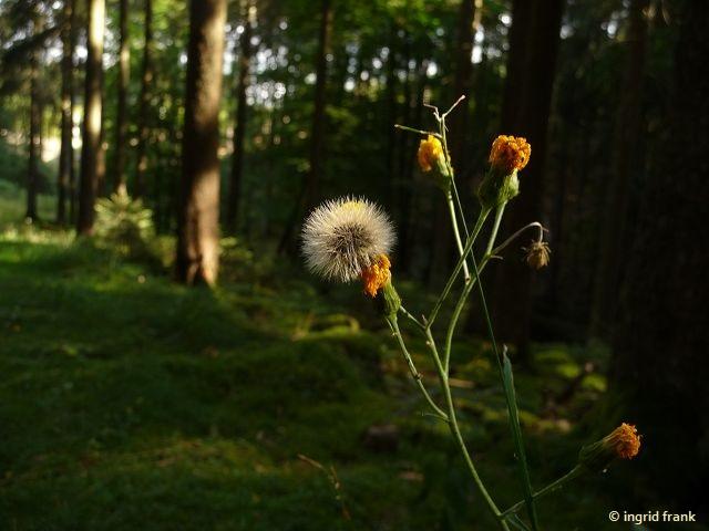 29.08.2016 - Im Saarland bei Losheim am See