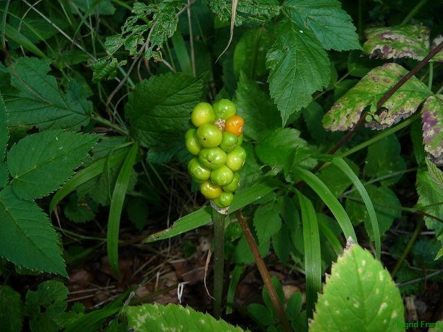 12.08.2013 - Im Naturschutzgebiet Weissenbronnen in Oberschwaben