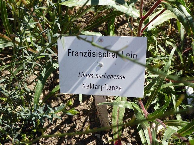 27.07.2020 - Syringa Kräutergarten in Hilzingen