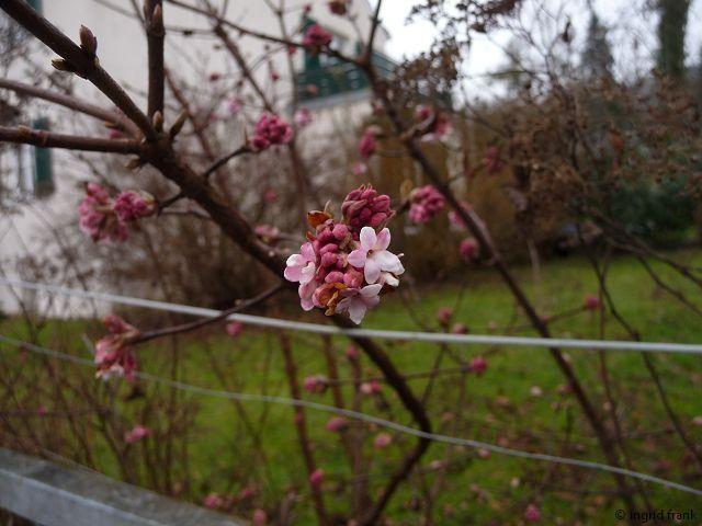 19.01.2013 - Garten in Weingarten