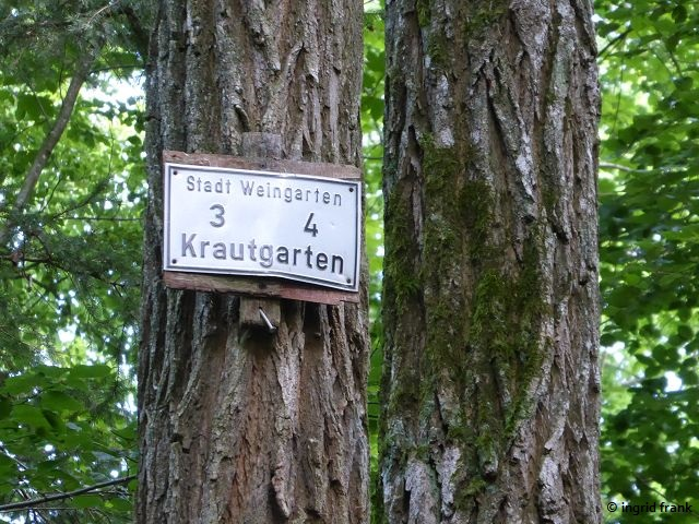13.07.2019 - NABU-Exkursion im Stadtwald Weingarten mit Hubert Kapler