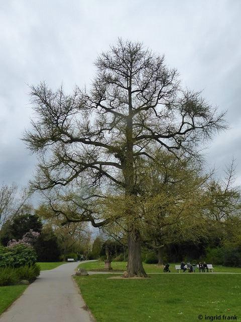 11.04.2021 - Weinheimer Schlosspark