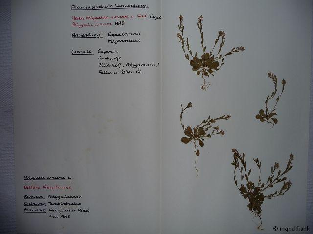 Aus meinem Herbarium von 1969