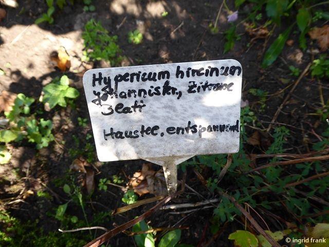 17.09.2018 - Schlosspark Weinheim, Heilkräutergarten