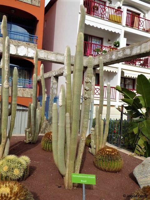 17.02.2020 - Gran Canaria, Playa del Cura, Kakteengarten Hotel Labranda Riviera Marina