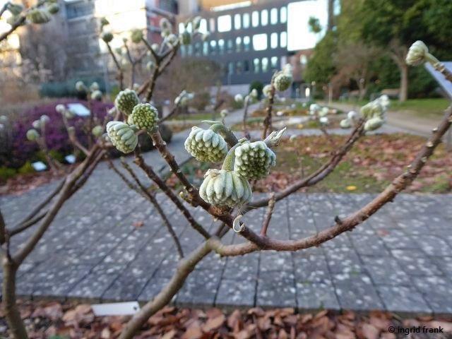 15.01.2020 - Botanischer Garten Universität Heideberg