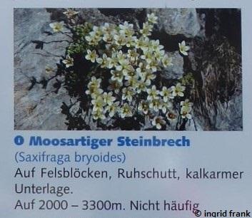 04.09.2019 - Wallis, Info-Tafel Bergstation Hohsaas