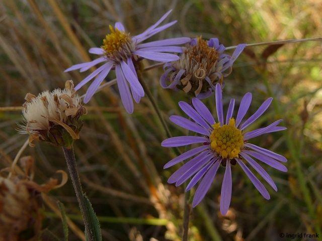 01.09.2016 - Im Naturschutzgebiet Hammelburg im Saarland