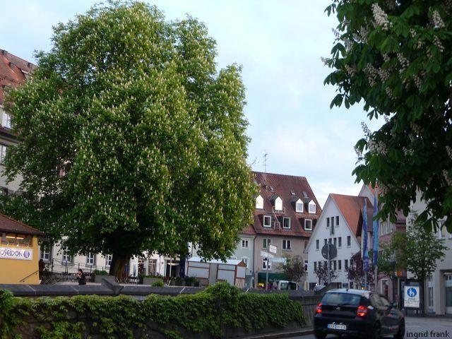 29.04.2014 - Weingarten, Münsterplatz