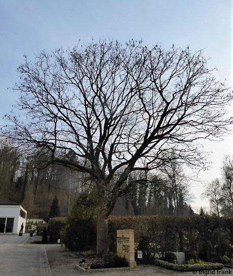 09.03.2021 - Weingarten, Kreuzbergfriedhof