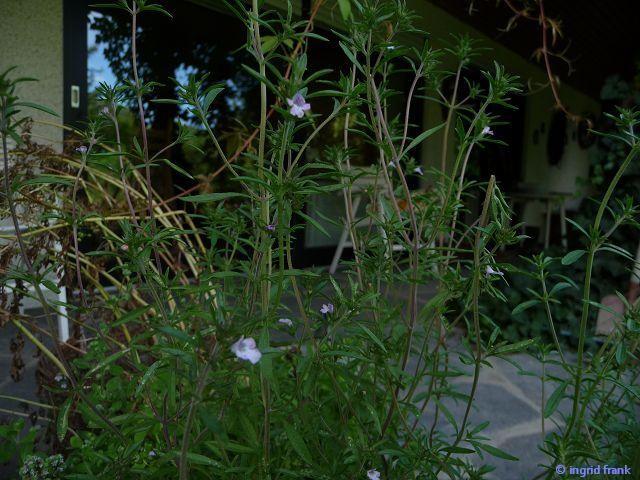 15.08.2010 - Im eigenen Garten