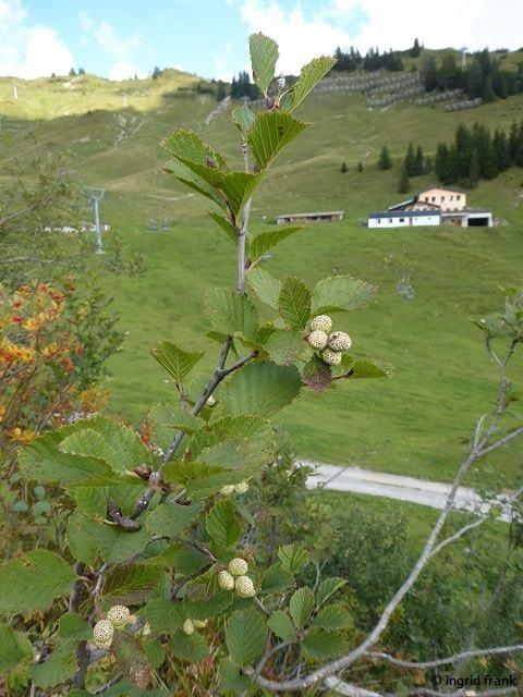 17.09.2019 - Bregenzerwald, Von Faschina zum Glatthorn