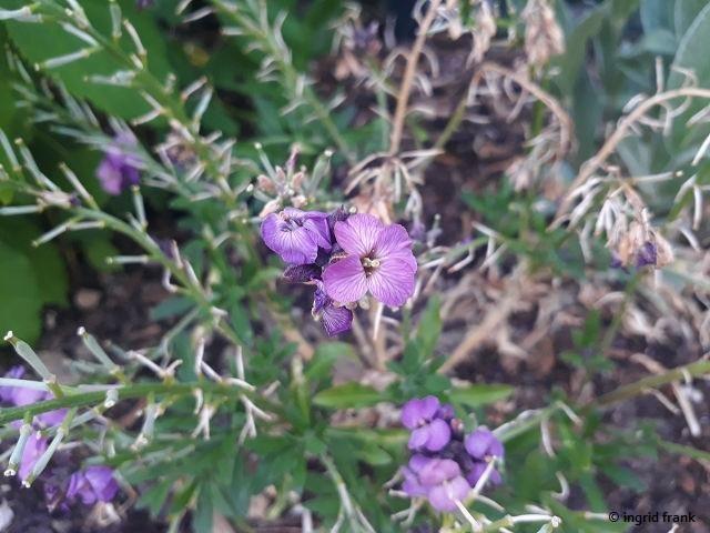 31.05.2020 - Im Garten meiner Schwägerin Edeltraut