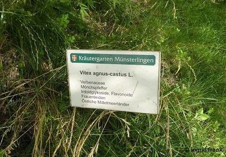 08.07.2018 - Im Kräutergarten von Kloster Münsterlingen