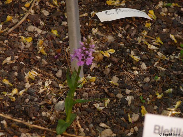24.05.2012 - Botanischer Garten Leipzig
