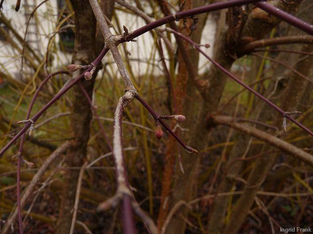 20.01.2012 - Im eigenen Garten