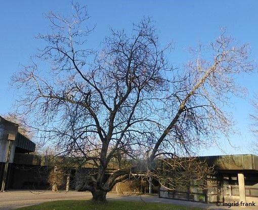 23.02.2021 - Ravensburg, Weststadtfriedhof