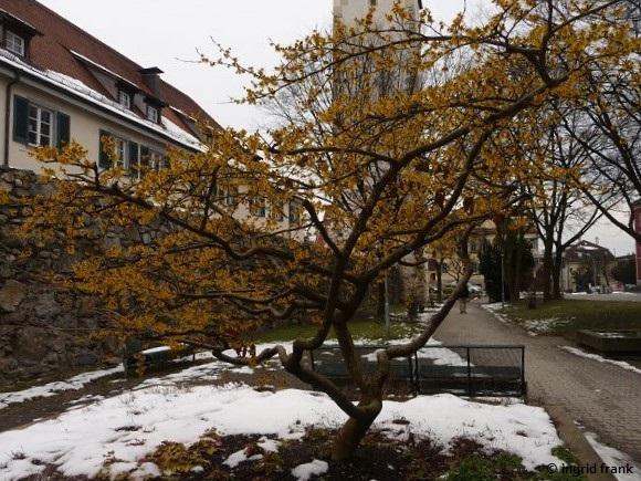 19.02.2013 - Ravensburg Anlage in der Karlstraße
