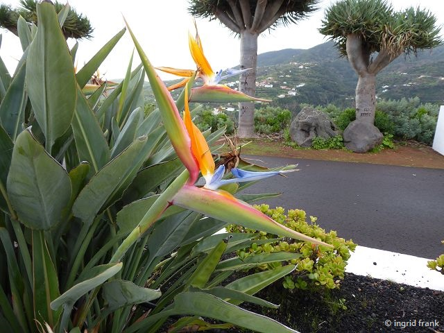 20.02.2018 - Mirador San Bartolo im Nordosten von La Palma