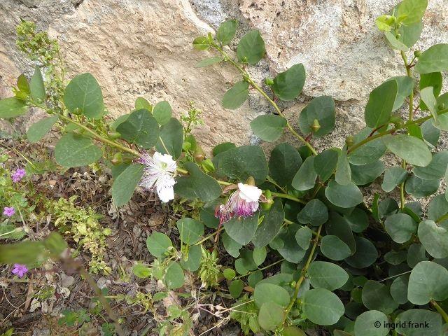01.05.2019 - Toskana, Halbinsel Monte Agrigento