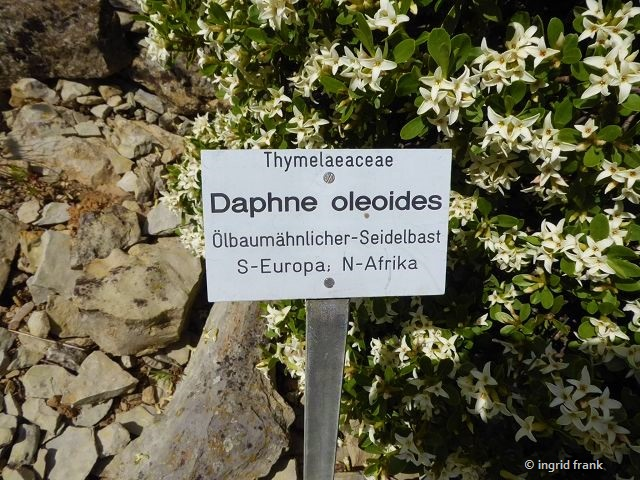 12.05.2019 - Botanischer Garten Universität Wüürzburg