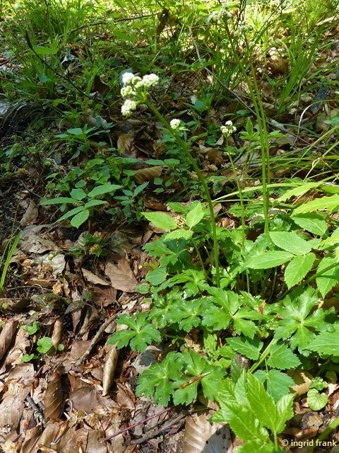 06.05.2020 - Im Altdorfer Wald östlich vom Lochmoos