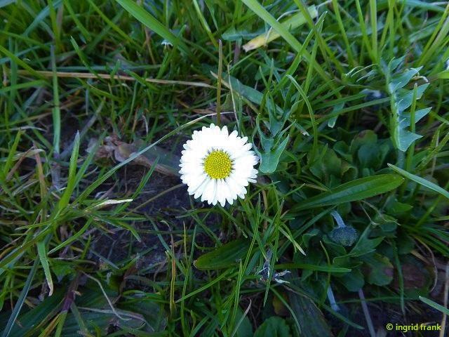 15.05.2020 - Lochmoos
