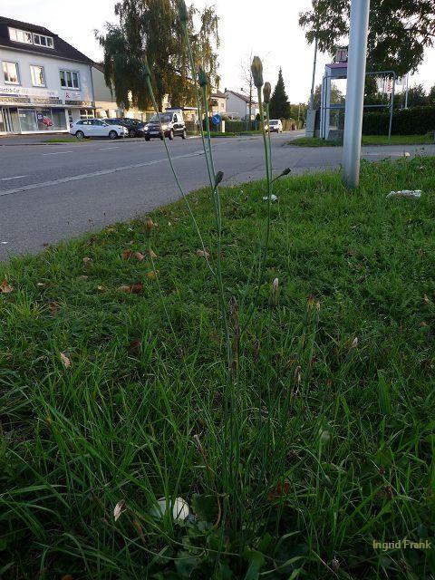 03.10.2012 - Straßenrand in Weißenau