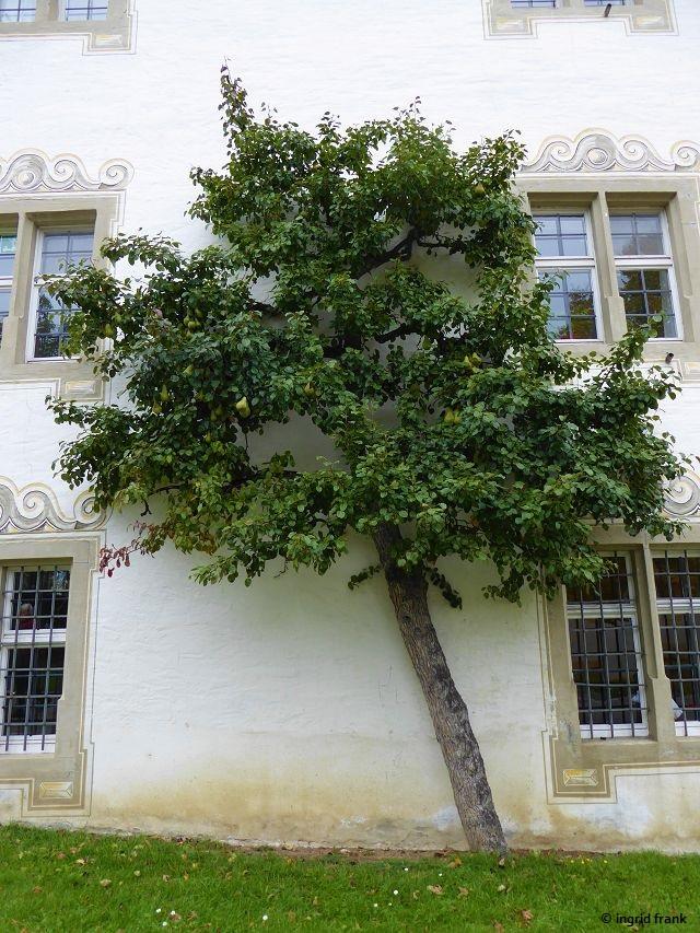 08.10.2019 - Kloster und Schloss Salem, Langbau (Wirtschaftsgebäude)